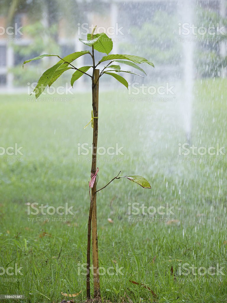 Watering young plant royalty-free stock photo
