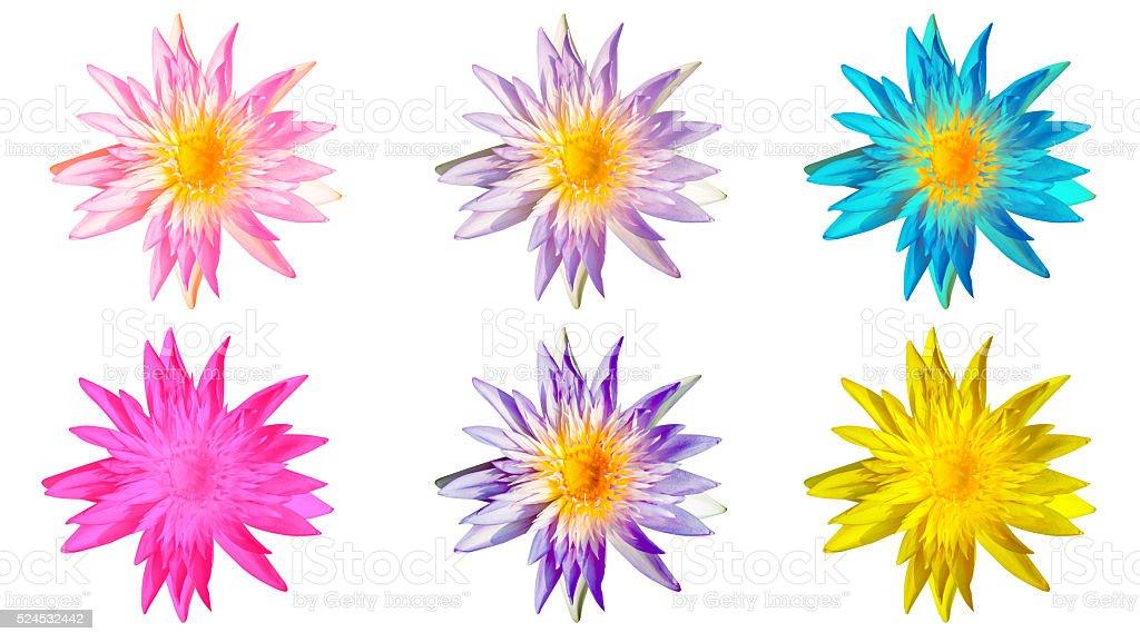 Seerose Blüte, schönen Blumen Lizenzfreies stock-foto