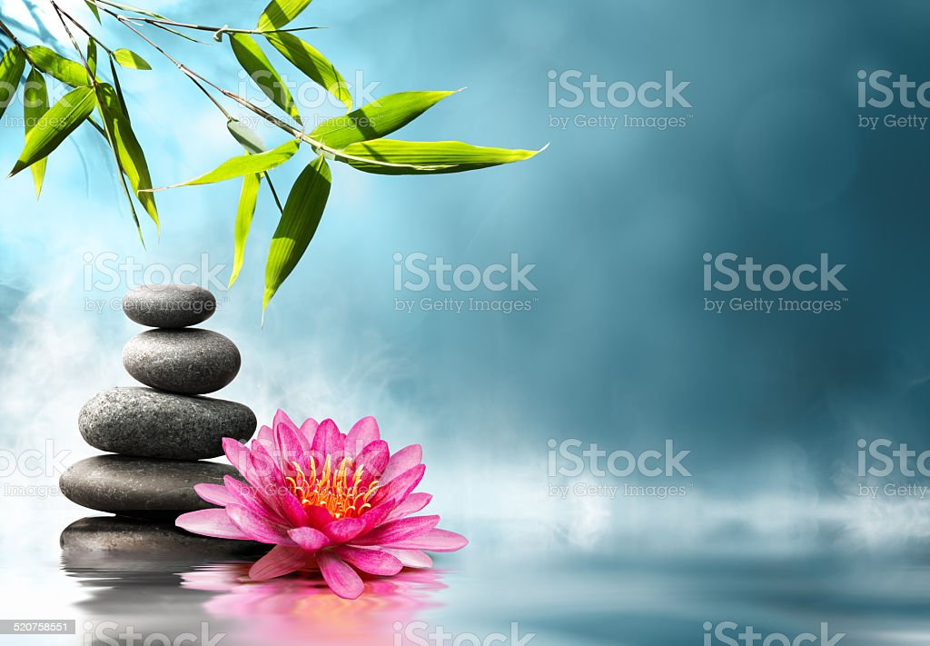 waterlily with stones and bamboo stock photo