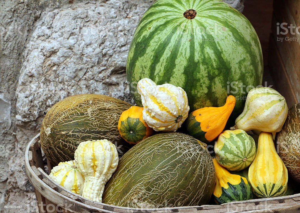 Watermelon, melons and different small squashes stock photo