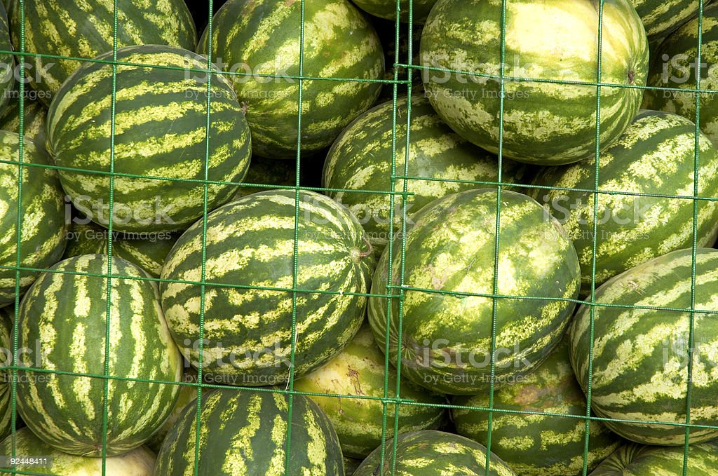 water-melons on the market stock photo