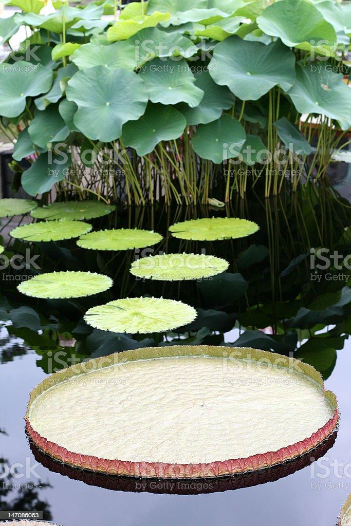 Water-platter royalty-free stock photo