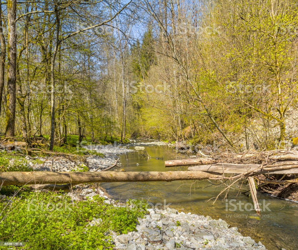 waterside scenery at spring time stock photo