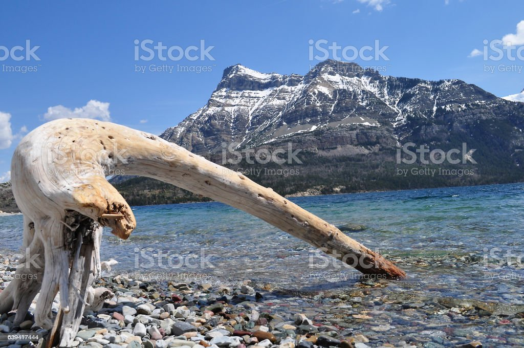 Waterton Lakes Driftwood stock photo