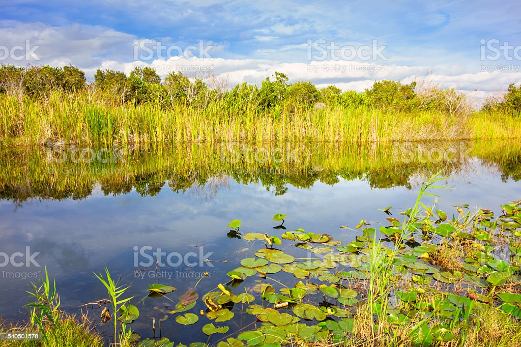 Waterway in the Everglades Florida USA stock photo