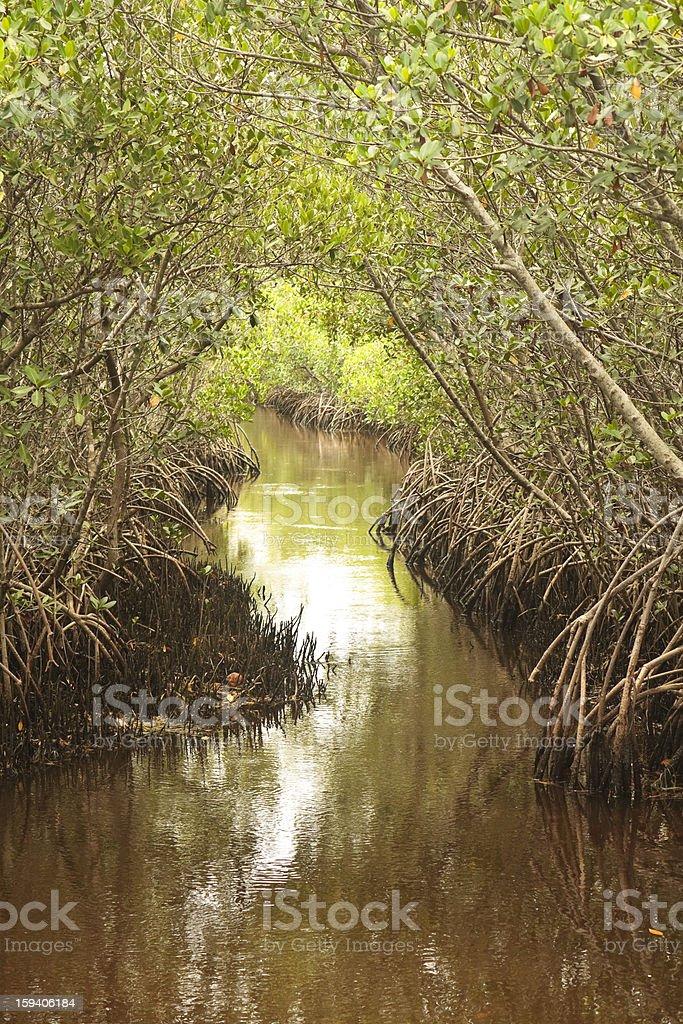 Waterway Through the Mangroves stock photo