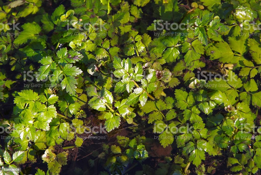 Watery Plants In A Bog stock photo