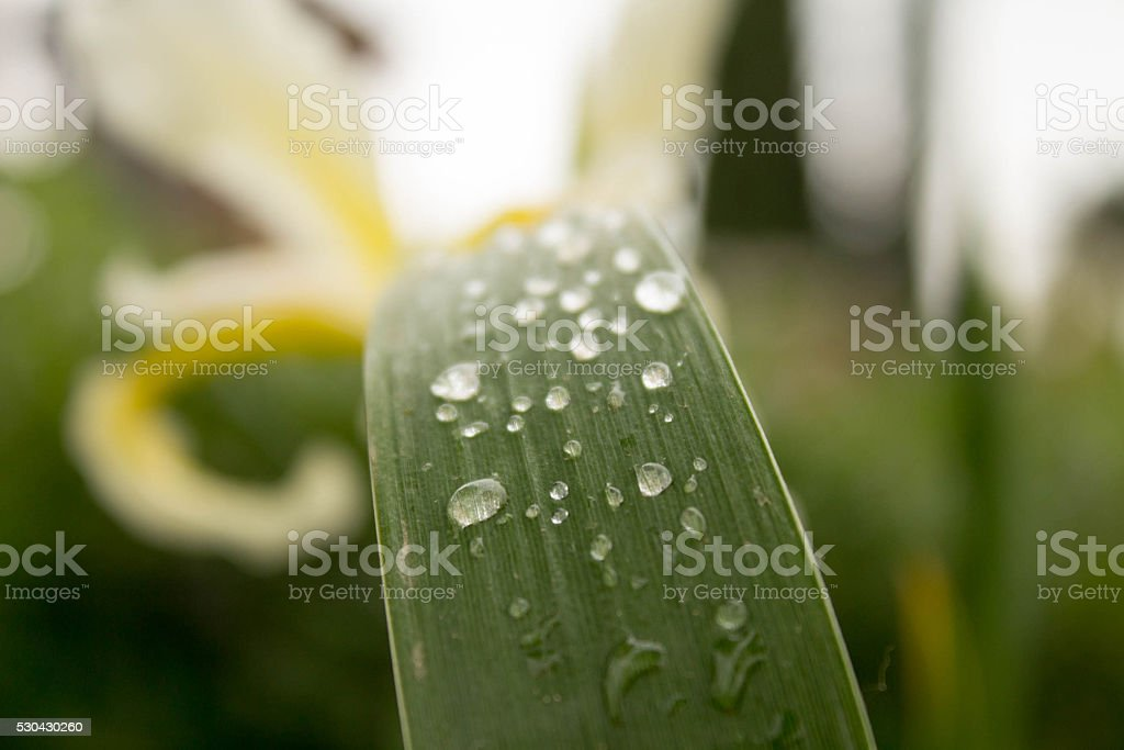 Wather drops on leaf stock photo