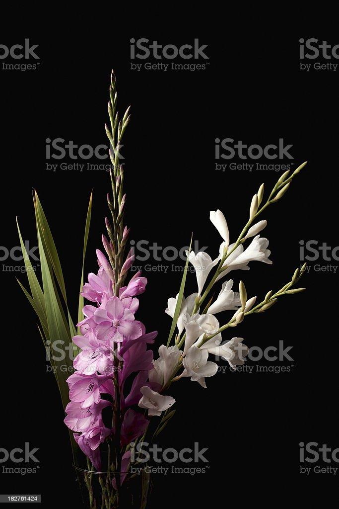 Watosonia flowers stock photo