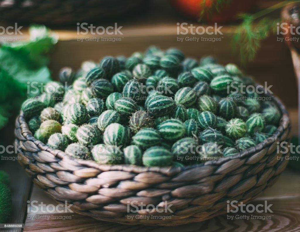Wattled basket with heap of ripe Cucumis myriocarpus stock photo