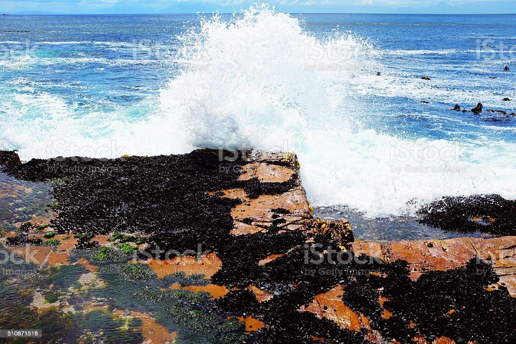 Wave breaking over mussel-encrusted rocks stock photo
