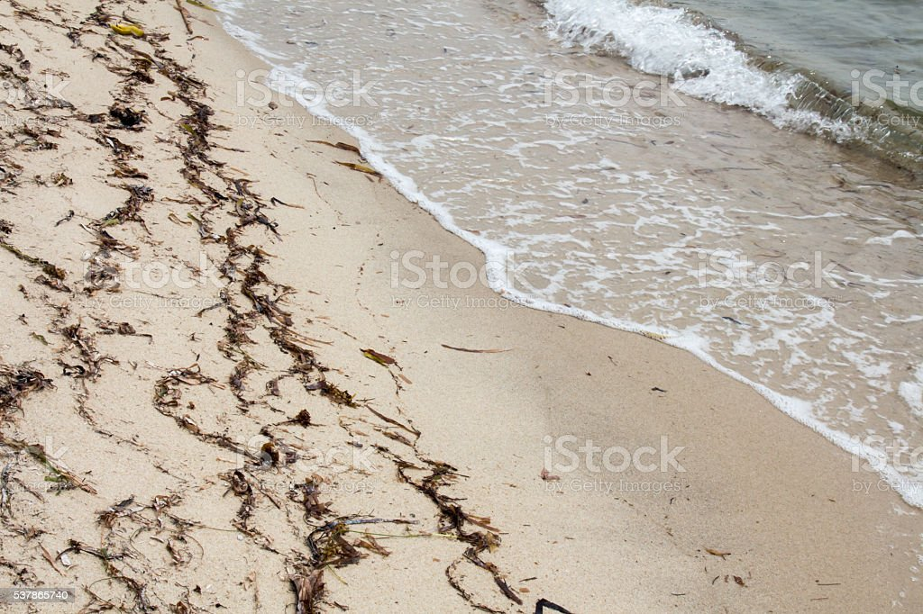 Waves and dead sea grass, beach in Placencia, Belize stock photo