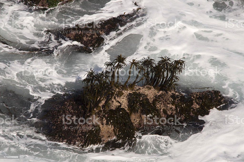 Waves and Kelp stock photo