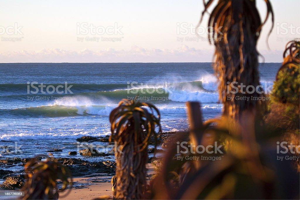 Waves behind aloe plants stock photo