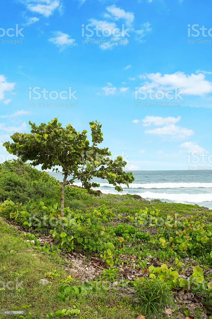 Waves coming towards shore in Cayman Islands stock photo