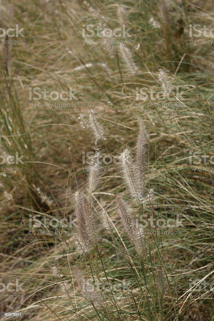 Waving Calming Grassy Field stock photo