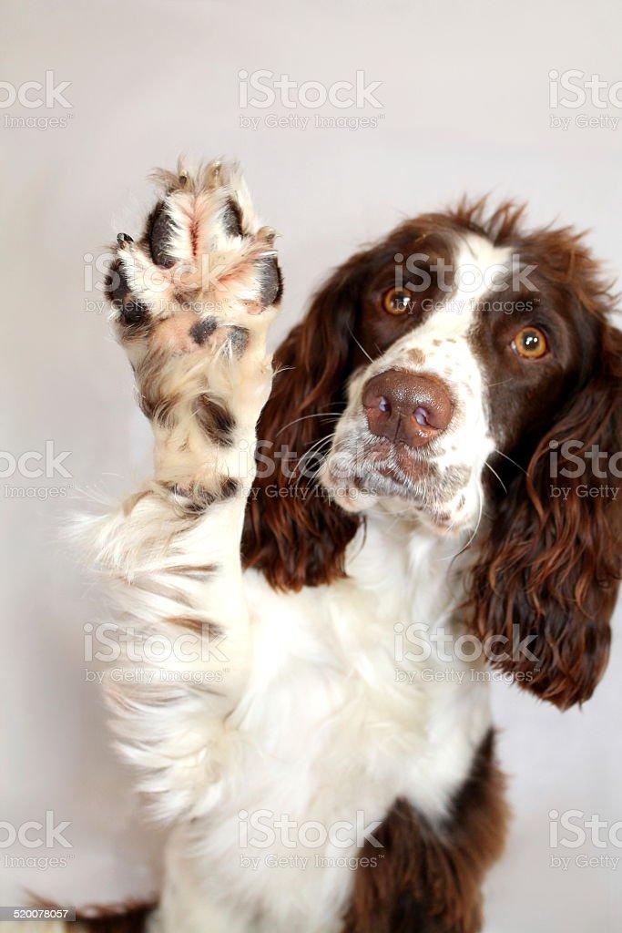 waving Manny stock photo