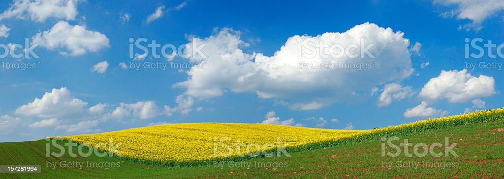 Waving Rape Field royalty-free stock photo