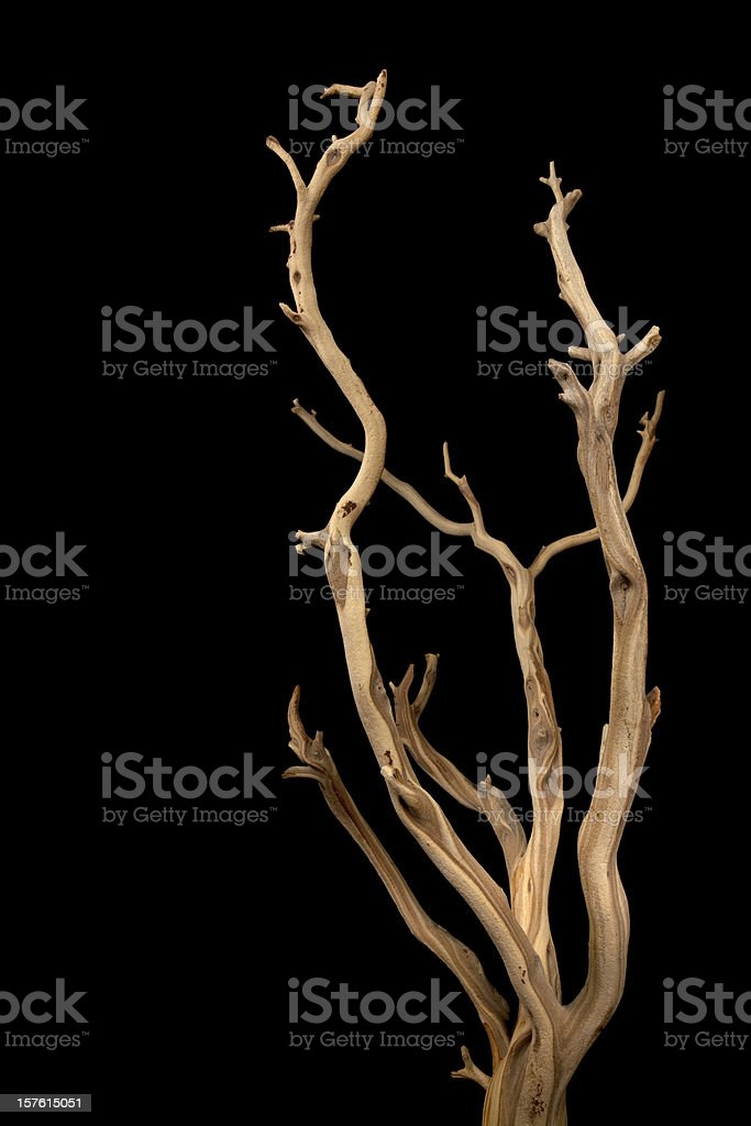 Wavy branches with no leaves isolated on a black background stock photo