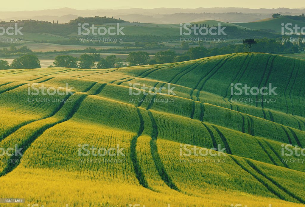 Wavy fields in Tuscany stock photo
