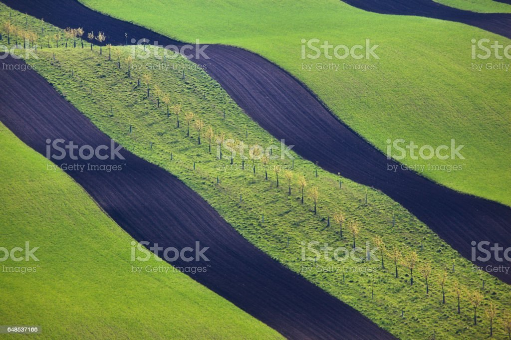 Wavy green fields in South Moravian, Czech republic. Striped rolling hills at sunset in spring. Minimalistic landscape with blossom green grass and black ground. Agriculture. Nature background stock photo