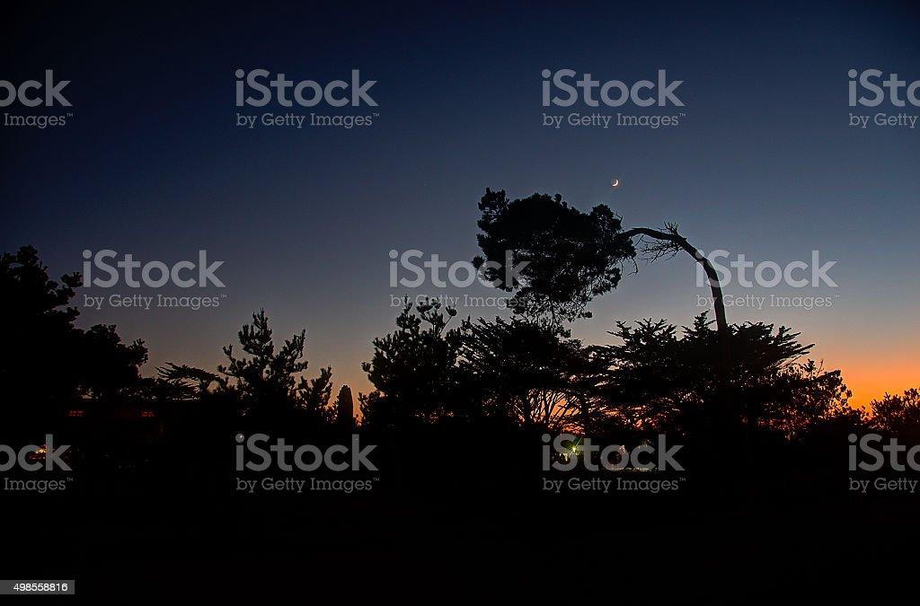 Эпиляция воском crescent moon через деревья на закате Стоковые фото Стоковая фотография
