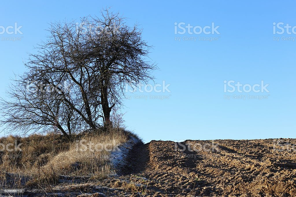 Way between field and meadow royalty-free stock photo