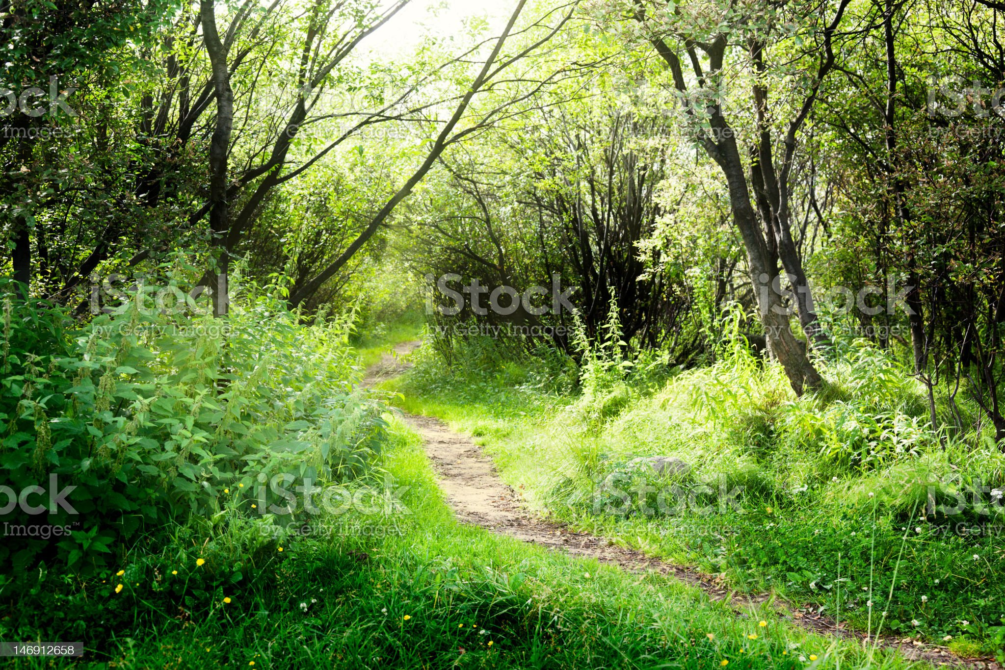 way in deep forest royalty-free stock photo