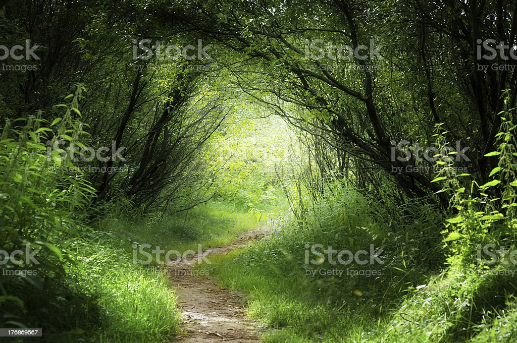 way in deep forest stock photo