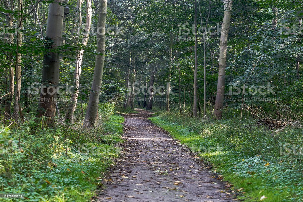 Way in the forest stock photo