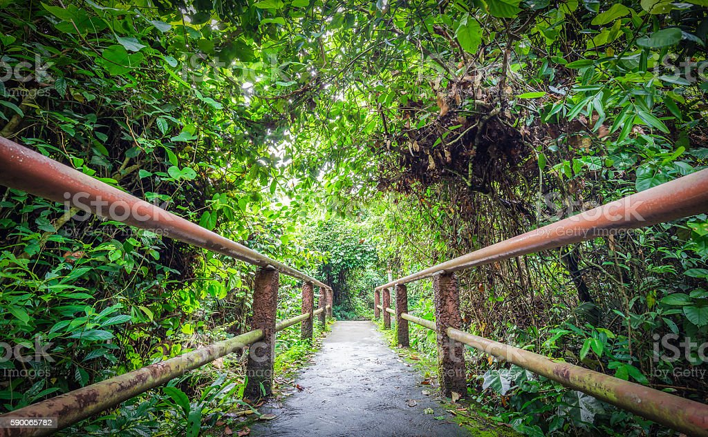Way inside tropical forest stock photo