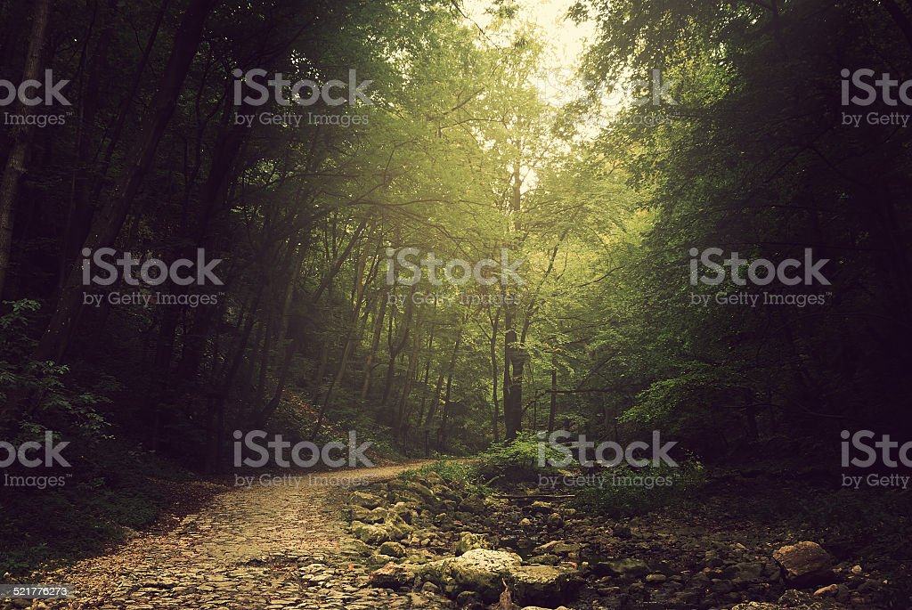 Way into the forest stock photo