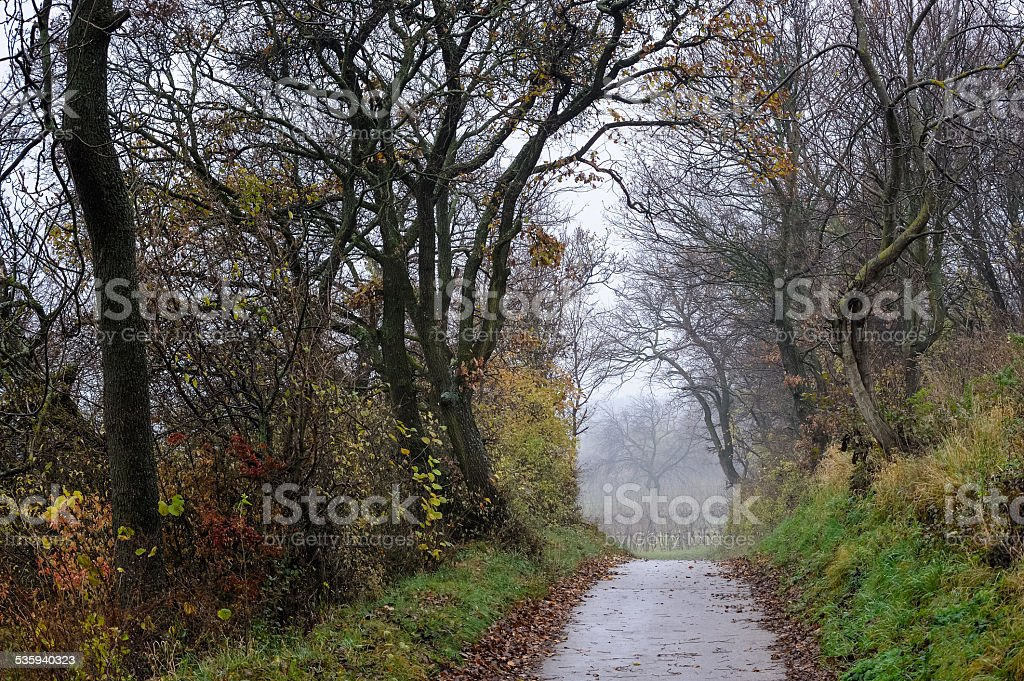 Way through autumn landscape with fog stock photo