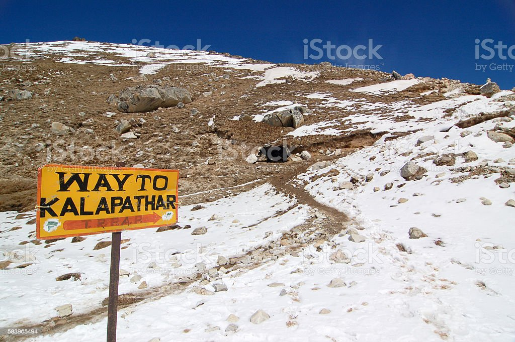 Way to Kalapatthar with yak, Everest Region stock photo