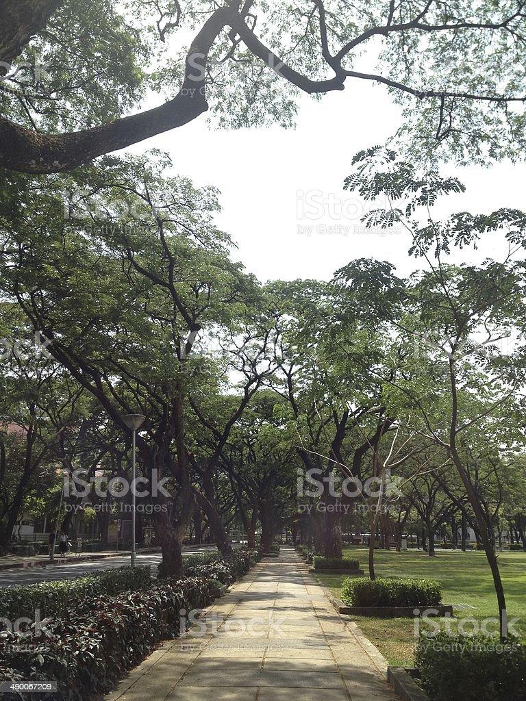Путь в зеленое дерево бранч в «для достижения цели Стоковые фото Стоковая фотография
