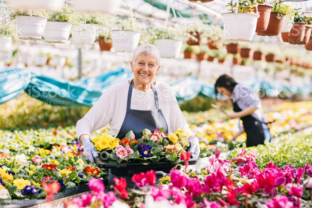 We grow the best flowers stock photo