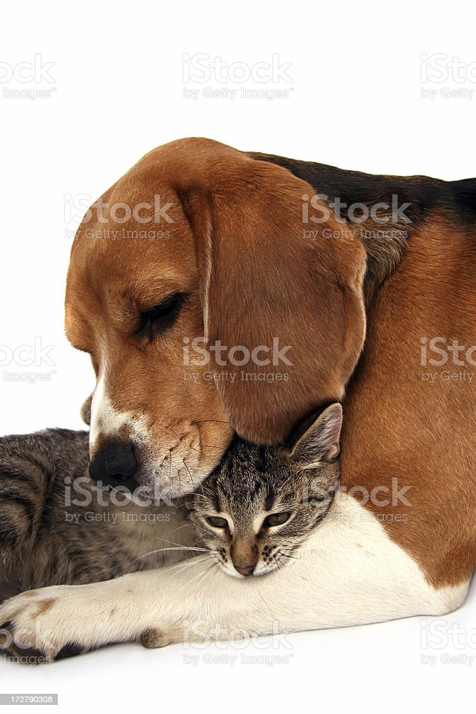 We have  rest together royalty-free stock photo