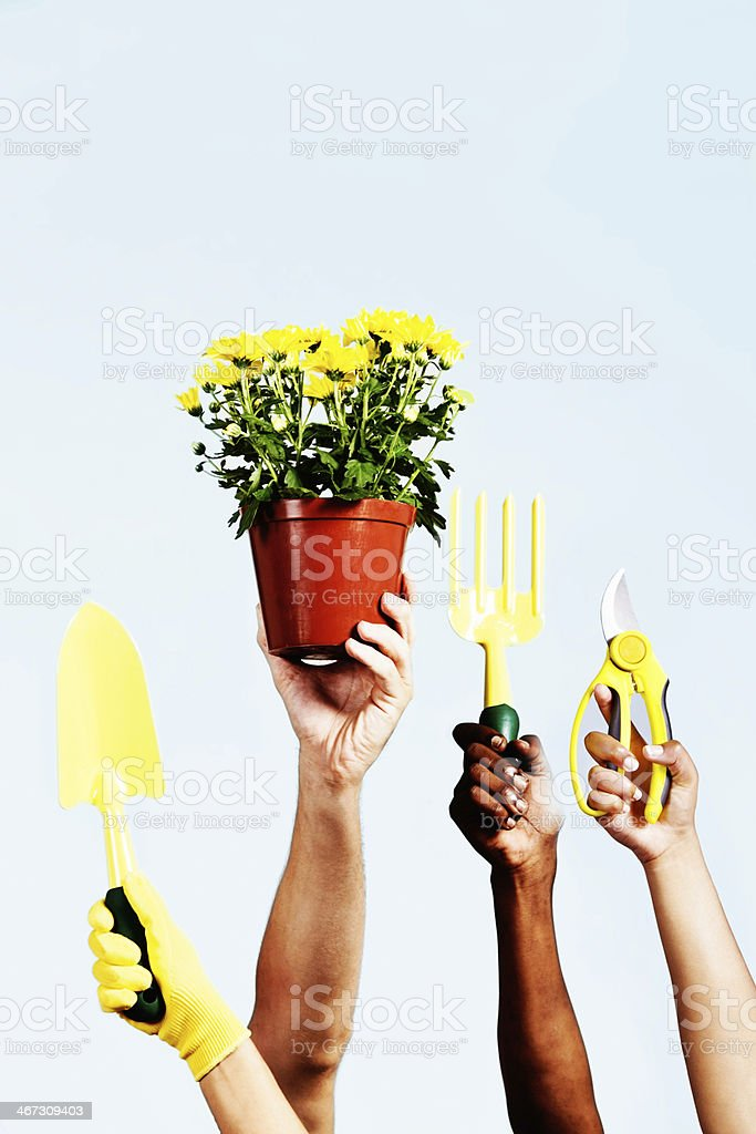 We love gardening! Hands hold up tools and potplant royalty-free stock photo