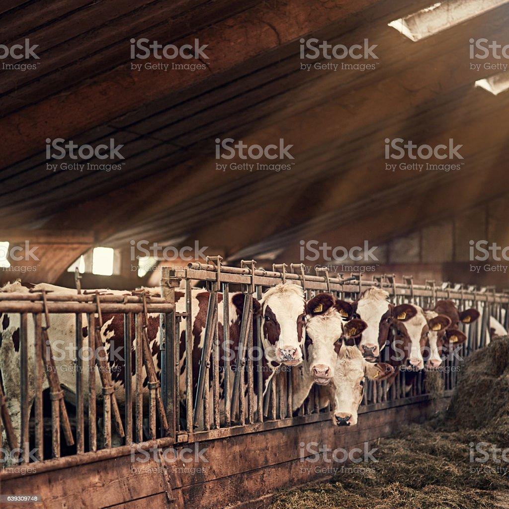 We love the farm life stock photo