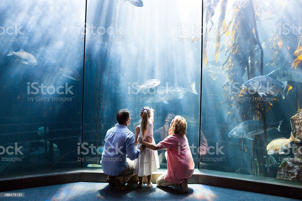 Wear view of family looking at fish tank stock photo