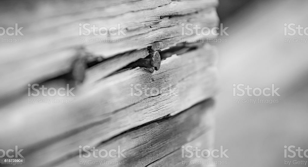 Weatherd Wood Board with Rusty Nails stock photo