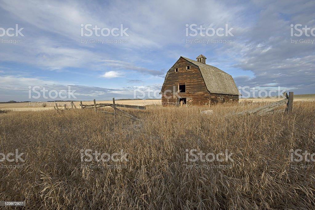 weathered barn at dawn royalty-free stock photo