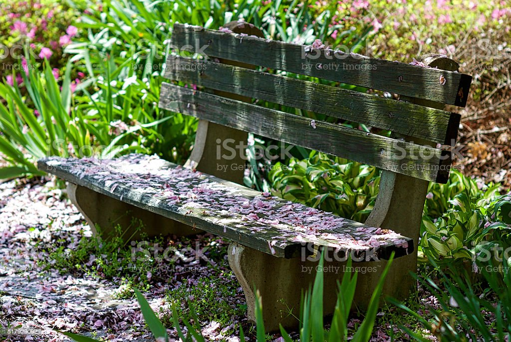 Weathered Bench in Flower Garden stock photo