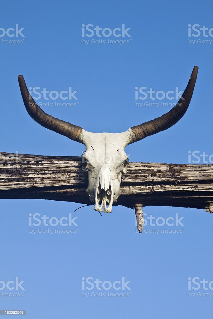 Weathered Cattle Skull royalty-free stock photo