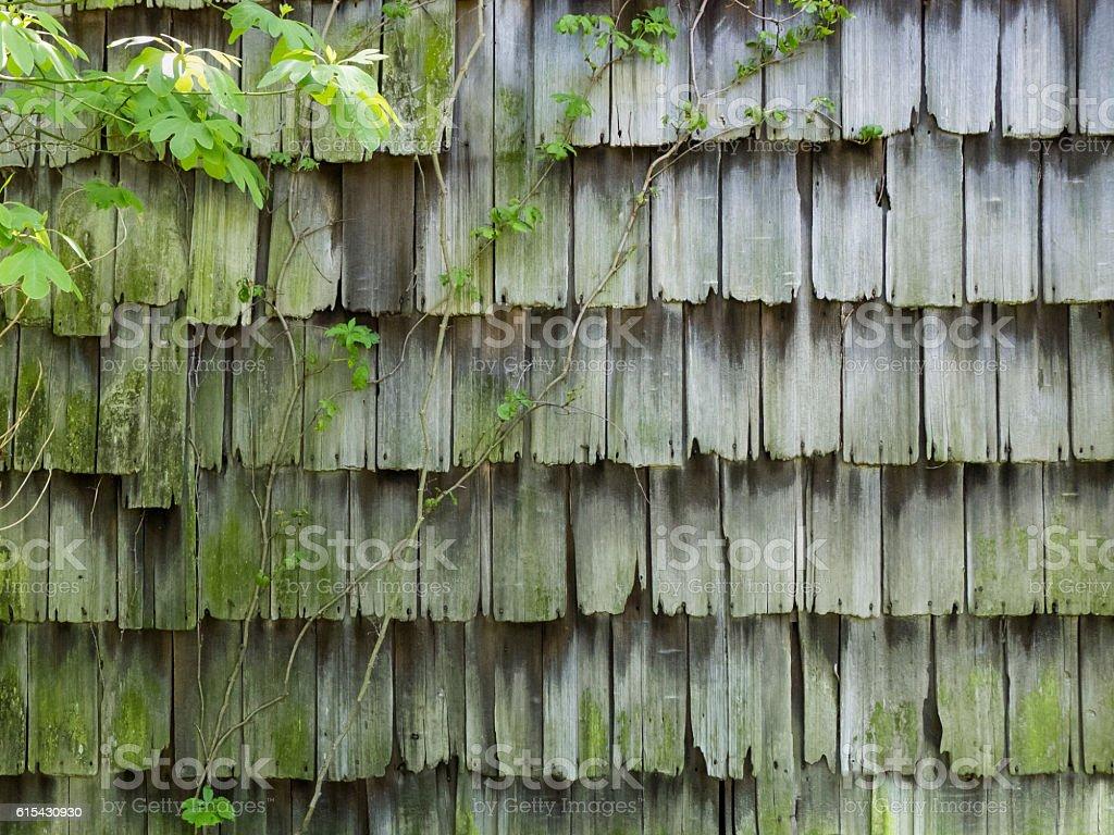Weathered Cedar Shingles stock photo