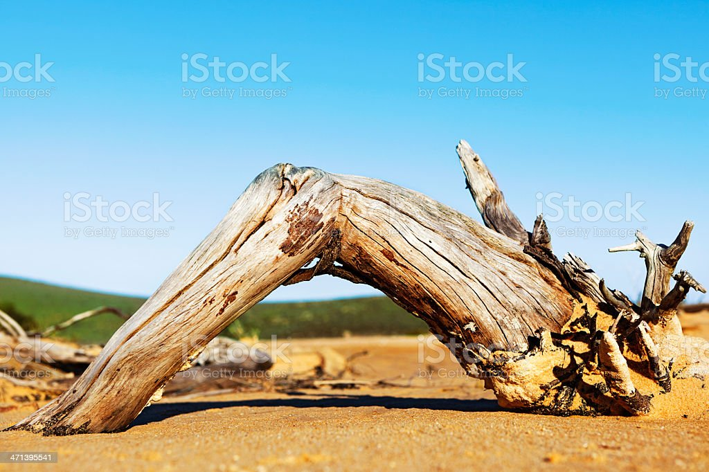 Weathered driftwood on sand with clear sky royalty-free stock photo