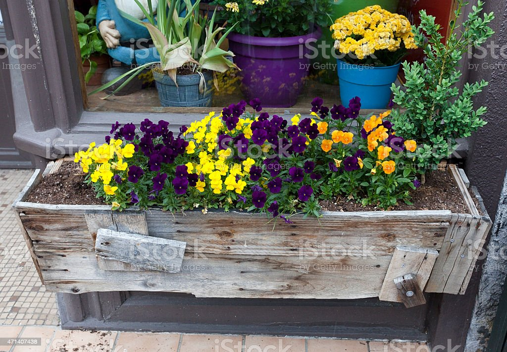 Weathered spring flower box in front of window with flower pots....