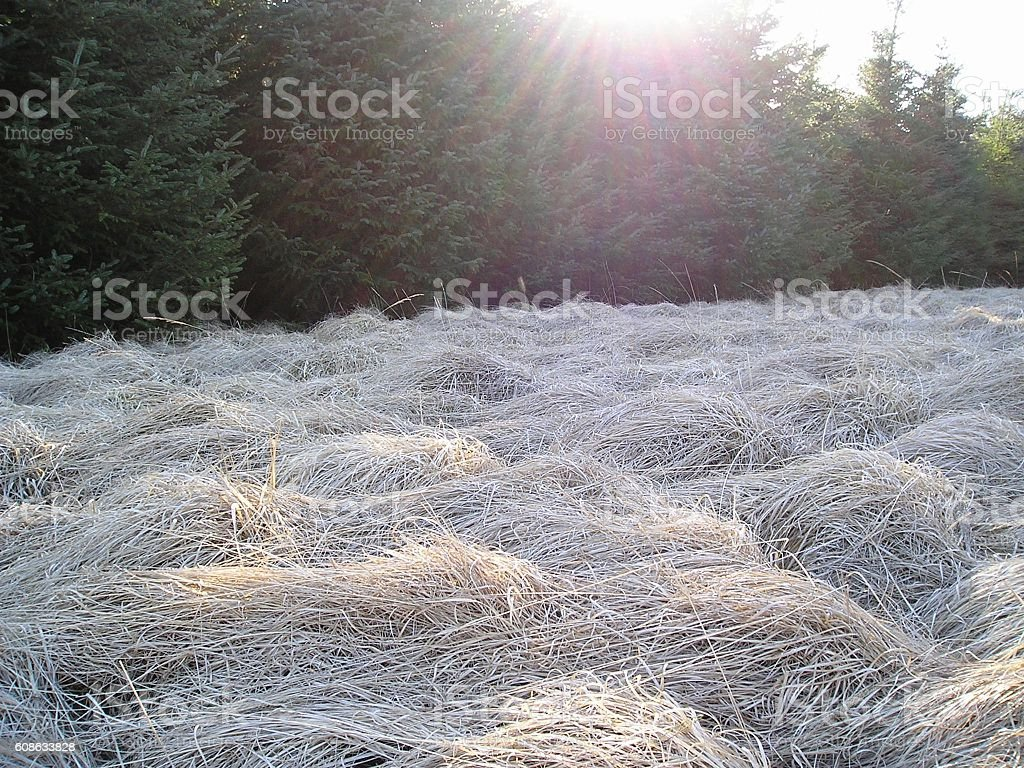 Weathered Grass in a field stock photo
