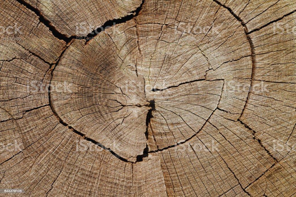 Weathered Oak Tree Cross-Section – Foto