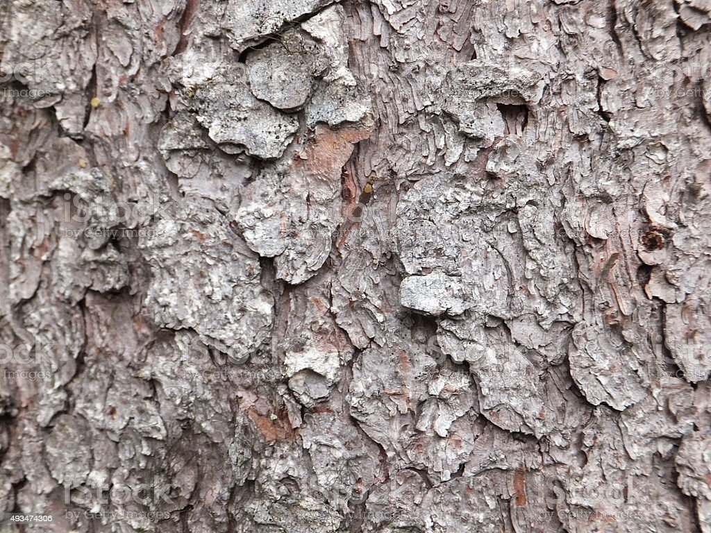 Weathered Tree bark stock photo
